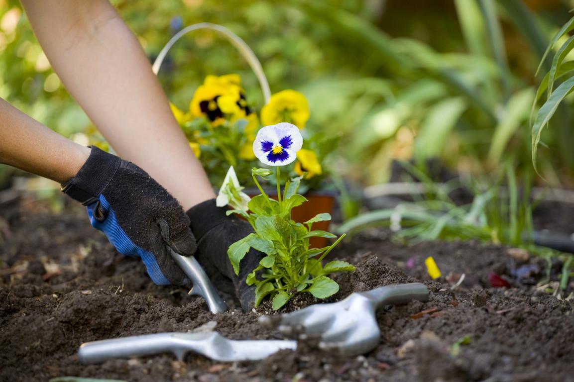 Нельзя сажать цветы дома 115