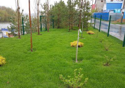 До и после прочесывания и обслуживания газона — Танковое Кольцо