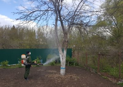 Опрыскивание плодовых деревьев весной, кустарников и декоративных растений.