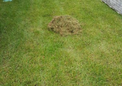 Прочесывание газона, Займище