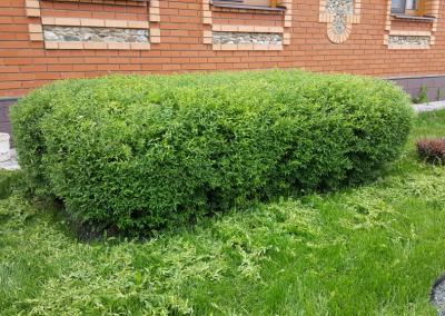 Стрижка кустарников на участке, Арск