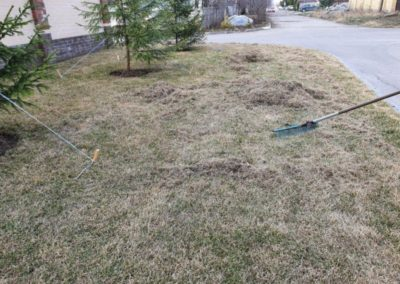Прочесывание газона в Царицыно
